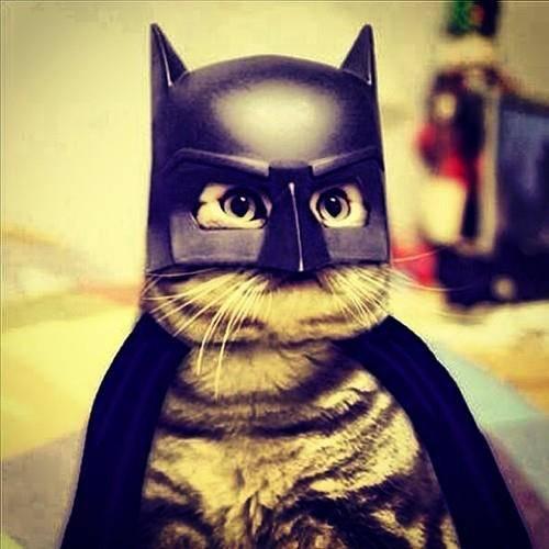 chat deguisement batman